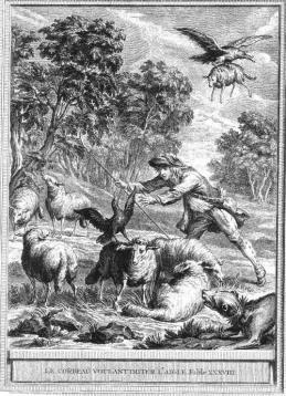 aigle choucas berger