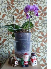 1orchidee