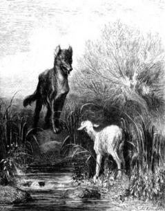 Loup agneau