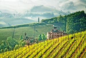 Vignoble de Toscane