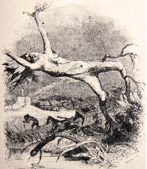 Le chêne et le roseau La Fontaine