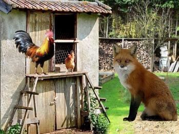 Le Coq et le Renard de fabulgone