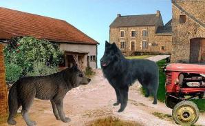 Loup et le Chien de Fabulgone