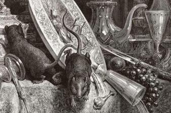 Rat ville et Rat champs