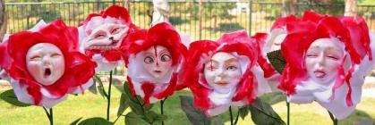 Roses blanches et rouges